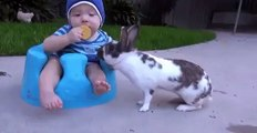 very funny baby video 2
