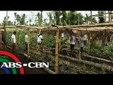 Yolanda survivors tries organic farming