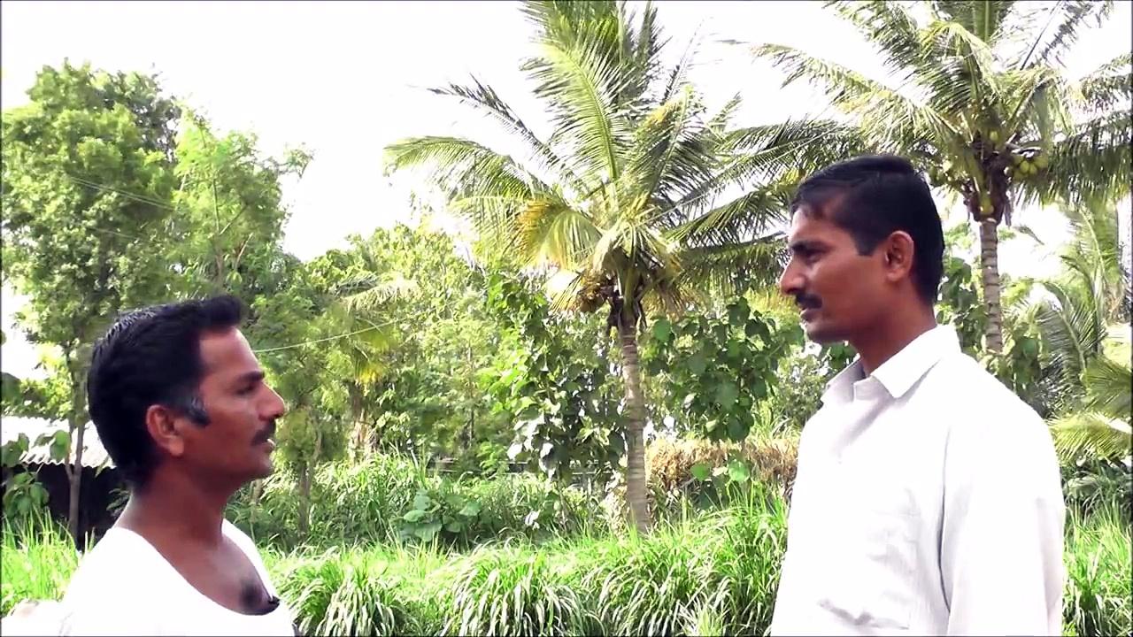 Azolla feeding for cattle – Raibag