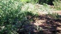 Planting Blueberries & Amending Soil pH - Blueberry Soil Preparation - Blueberry Soil Conditions