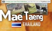 """""""Elephant Nature Park"""" Cjgr's photos around Mae Taeng, Thailand (elephant nature park mae taeng)"""