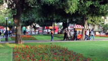 Miraflores, The Cats of Parque Kennedy , Lima, Peru