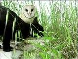Un chat pote avec une chouette - Sacrés amis !
