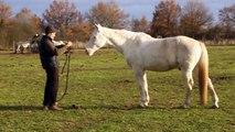rencontre entre un homme et un cheval (blue à horreur que l'on lui touche la figure ...)