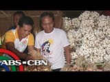 How Nueva Ecija farmers are affected by imported garlic?