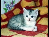「子猫ちゃん写真集」 可愛い子猫の写真画像を特集しま�