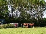 American Paint Horse Poco en veulens