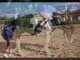 SUPER HORSES Argo & Pioggia, Cavalli e Cani Super Star.wmv