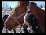Changing Leads - Youth At-Risk program at Hearts and Horses