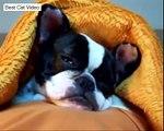 Funny Cute Animal Sleepy Falls Asleep Tired Cat Dog Koala Bear HD Videos Best Cat Video Compilati