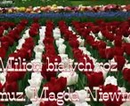 Milion białych róż - Magda Niewińska.mpg