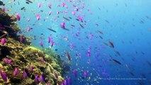 Ocean DVD - Underwater Wonders -With Sharks,Coral Reefs and Sea Turtles