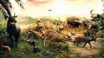 Sala 5 Asia (La Jungla Asiática) - Museo de la Fauna Salvaje