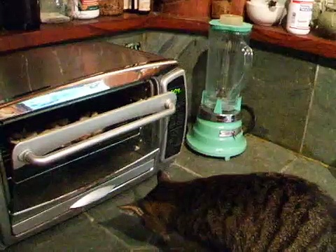 Kitty Stealing Shrimp