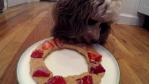 How to make a peanut butter strawberry icey for dogs!