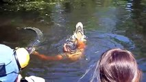 Guy jumps in river with crocodiles