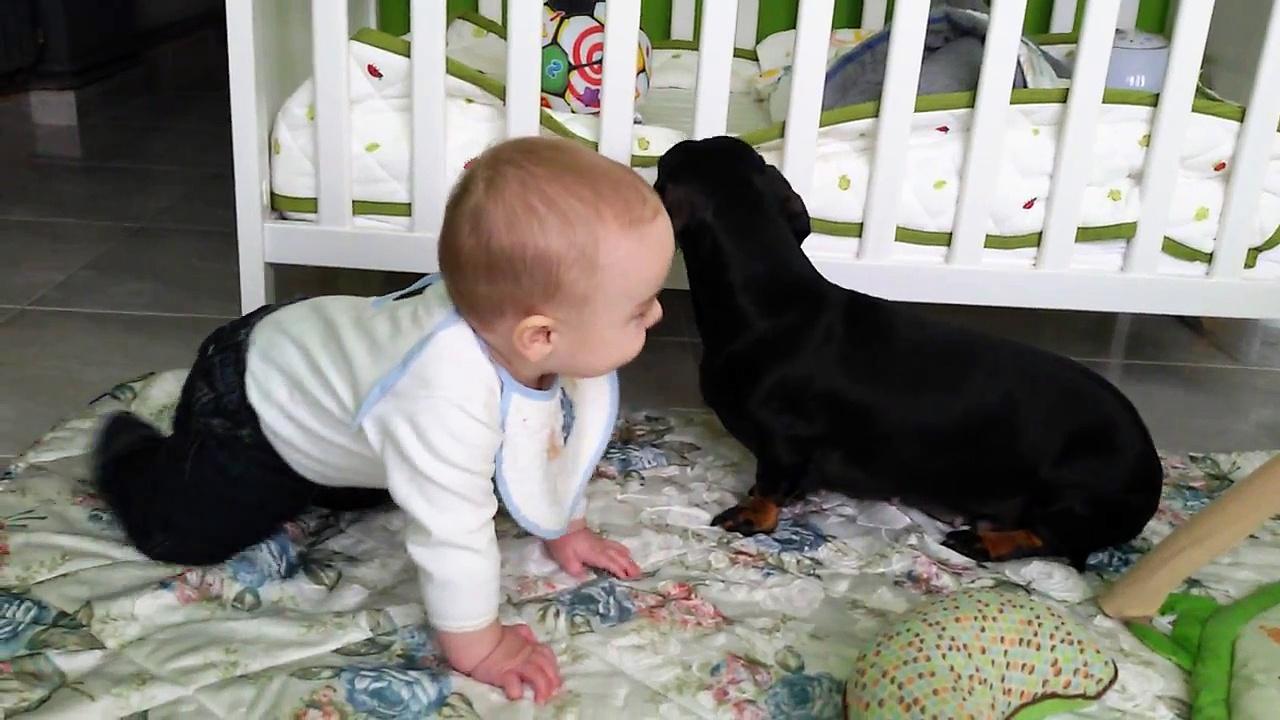 Julian Vs Zelda 2, baby playing with teckel. Criadero hotdog dachshund teckel
