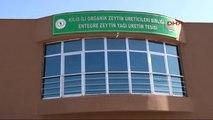 Kilis - Birleşmiş Milletler Heyeti, Kilis'te Zeytinyağı Tesisini İnceledi