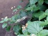 Papillon butinant à la ferme aux papillons