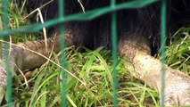 Zoo Lešná-Zlín 2011 3 část
