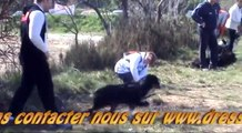 dressage des chiens pour le rappel au pied  par educateur canin eric tramson