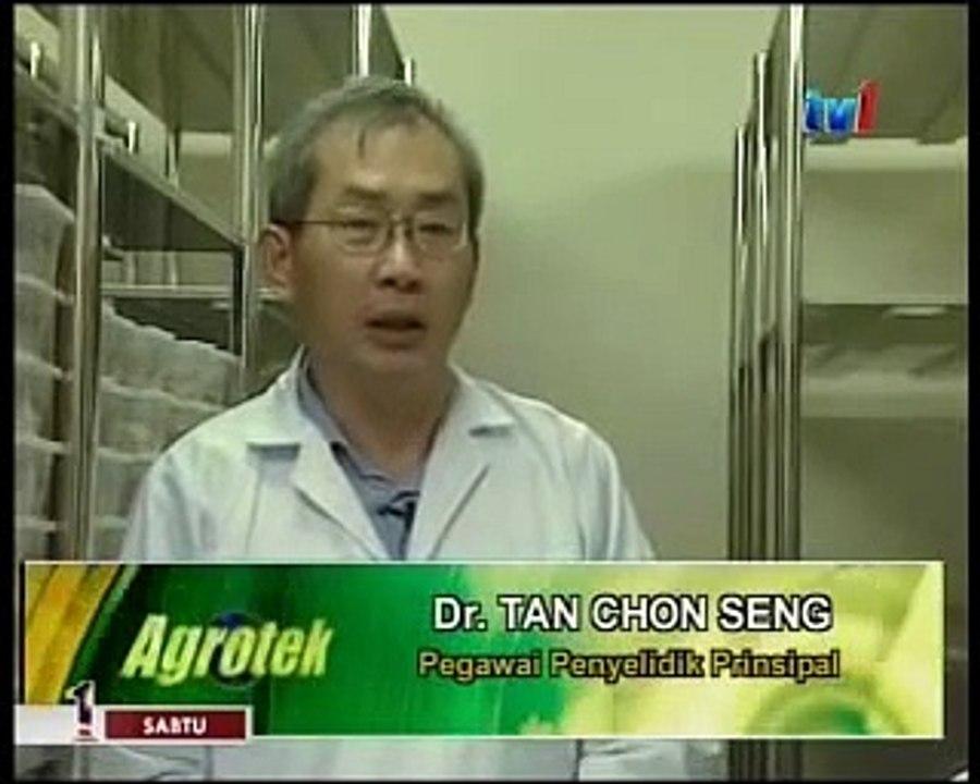 LiGNO BIOTECH - Cendawan Susu Harimau (Tiger Milk Mushroom) bersama Agrotek