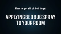 How to Stop Bed Bugs | Treat Your Room With Bed Bug Spray