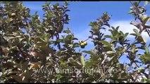 Global Ideas - Nachhaltigkeit weltweit: ÄTHIOPIEN -- WASSER FÜR DIE LANDWIRTSCHAFT (DVD / Vorschau)