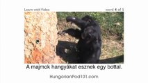 Learn Hungarian with Video -- How to Talk About Safari Animals in Hungarian