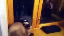 komik videolar kediler ve köpekler fun cats droll