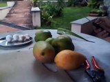 How to find out- Organic Mangoes vs chemical treated Mangoes