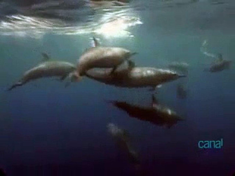 Habitantes dos Mares: Mamíferos - Os Cetáceos