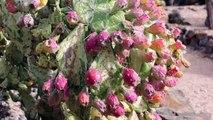 Australia's largest cactus garden. Cactus Country