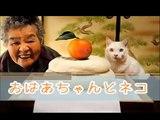 【ネコの感動する話】おばあちゃんとネコ【1分涙腺崩壊】