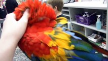 Petting a Scarlet Macaw at Pet Land