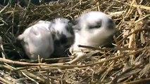 Cute Baby Bunnies Two Weeks Old