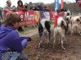 Course de chiens de traineaux de L'Arche de la Nature
