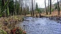 Wald - Wasser - Leben