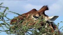 Shaba. Animal Adaptations   Nature Planet Doc Full Documentaries