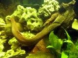 nouveau décor de l' aquarium de 410 litres de Djah Olive  (cichlidés du lac Malawi)