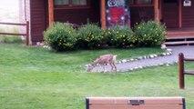 Dans la vraie vie, Bambi et Panpan jouent aussi dans le jardin