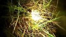 Bolivien Blog - Film 5: High frog activity