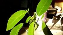 plante qui danse