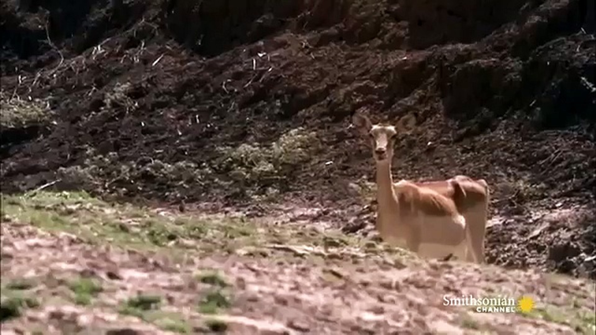 National Geographic Documentary Wild Animals attack National Geographic Animals ✔ ► P.7