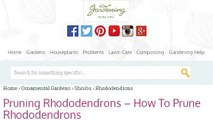 How-To Prune Rhododendrons After Blooming