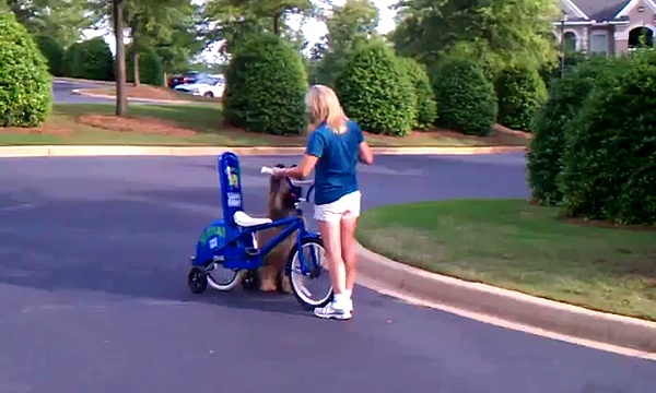 Cool Dog Riding a Bike