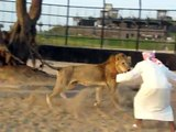 Arab and Lion - who wins