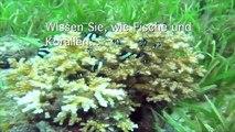 """Ausstellung """"Woher kommen unsere Fische"""" (SAIA)"""