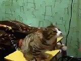 İlgi isteyen kedi