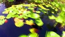 Okefenokee Swamp-Canon HV40-demon fisheye lens
